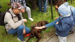 A képen az látható amint a majálisozók simogatják Bonca kutyát