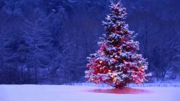 A képen egy feldíszített fenyőfa látható.