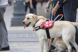 Vakvezető-kutya-fotó