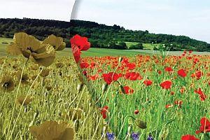 Kép forrása: rehabportal.hu