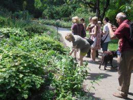 A képen az látható, amint a kertben sétálva megtapogatjuk a növényeket
