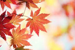 A képen: őszi falevél látható