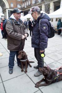 Attila és Csaba a két kutyussal