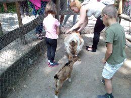 A képen az állatkerti programon résztvevő klubtag gyerekek állatokat simogatnak