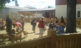 Az erzsébetvárosi klub tagjai az állatsimogatóban ismerkednek néhány háziállattal