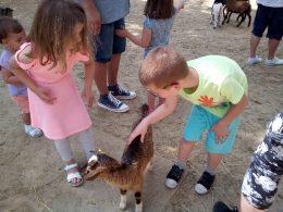 az angyalföldi gyerek klubtagok állatokat simogatnak a Holnemvolt parkban