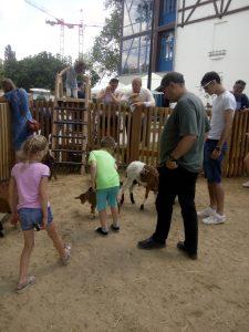 angyalföldi gyerekek kisállatokat simogatnak a Holnemvolt Parkban a gyereknapi programon