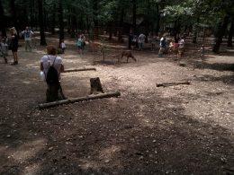 A budakeszi vadasparkban az állatsimogatóban őzikék között tartózkodnak az újbudai klubtagok