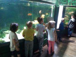 A képen az angyalföldi gyerek klubtagok egy akváriumban furcsa halakat néznek