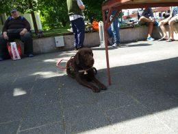 Bonca kutya is várja az újpesti piacon a látogatókat