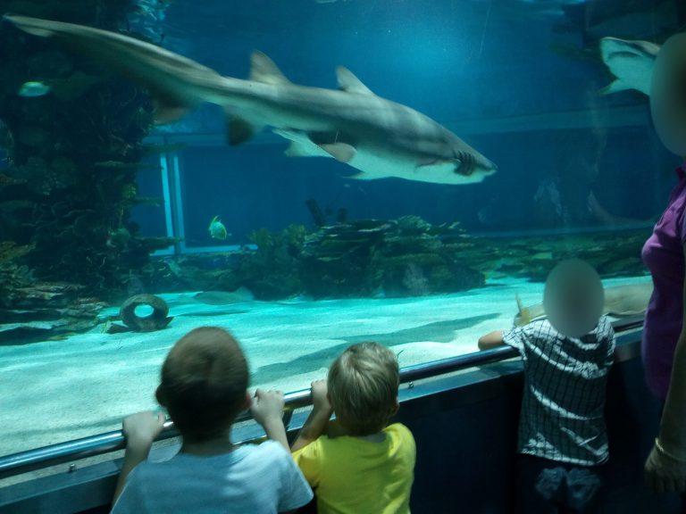 Az angyalföldi klub tropicariumi látogatásán a gyerekek és a felnőttek cápákat néznek