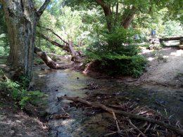 Korhadékfák láthatóak a patak vizében