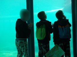 A képen néhány angyalföldi gyerek klubtag a fókákat nézi a medence előtt