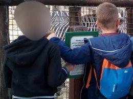 A képen két gyerek tag próbálja olvasni az egyik állatkerti tájékoztató feliratot a zebrák előtt állva