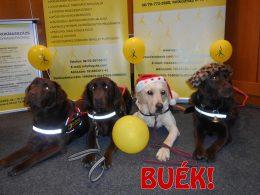 A VGYKE segítő kutyusai - a képen BUÉK! felirat látható